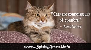Cat Quotes Mesmerizing Cat Quotes