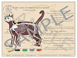 Small Double Sided Laminated Jsj For Your Canine Feline Companion Chart