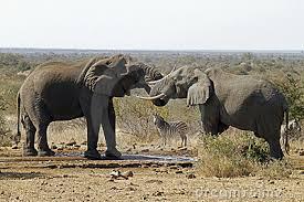Resultado de imagen de Elefantes y cebra