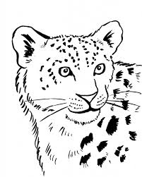 Snow Leopard Coloring Page Samantha Bell