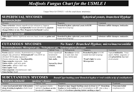 Chart Note Using History And Physical Style Free Downloads Scutsheets Patient Trackers Patient Info