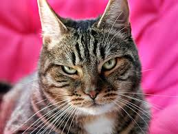 Image result for cat images