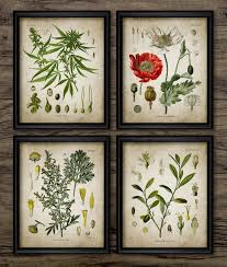 plant wall art set of 4 vintage