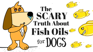 Fish Oil Dosage Chart For Dogs Fish Oil For Dogs The Scary Truth Simple Wag