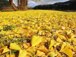 「散る葉」の画像検索結果