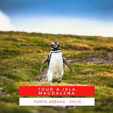 Los... - Fiordos del Sur - Isla Magdalena Patagonia Chile   Facebook