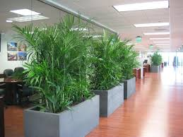 office planter boxes. Corporate Open Plan 003. VIEW MORE PLANTER BOXES Office Planter Boxes