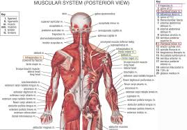 Lower All Human Body Systems