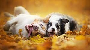 dog, Animals, Depth Of Field, Fall ...
