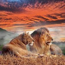 Silové Totemové Zvíře Lev