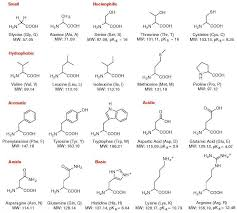 Amino Acid Chart Fascinating Amino Acid Therapy Chart Denmarimpulsarco