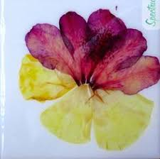 Decorative Tile Coasters REAL FLOWERS Ceramic Tile Coasters by Spectrumm on Etsy 78