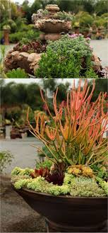Small Picture How to Plant Beautiful Succulent Gardens in 5 Easy Steps