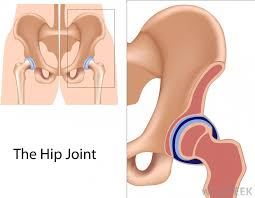 ball and socket joint. the hip joint is an example of a ball and socket joint. o