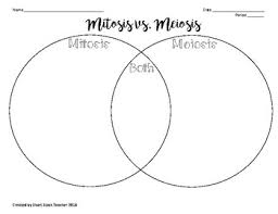 Venn Diagram Comparing Meiosis And Mitosis Mitosis Vs Meiosis Venn Diagram