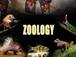 نتيجة بحث الصور عن الهيكل التنظيمي لقسم علم الحيوان