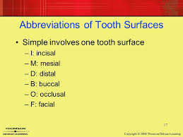 Surfaces Of The Teeth Chart Image Result For Surfaces Of Teeth Chart Tooth Chart