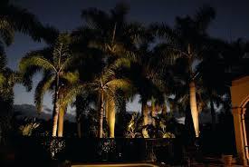 palm tree lighting fixtures lighting palm tree expert outdoor advice lighted outdoor led palm tree lighting