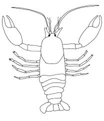 46fa6588c86e8e67c58a2c116c0c8a93 student blank copy foss science crayfish pinterest obr�zky a on crayfish dissection worksheet