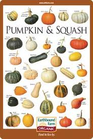 vegetables names list. Modren List Alternative Gardning Pumpkin U0026 Squash Varieties Chart  GardeningGardeningTips And Techniques Inside Vegetables Names List C