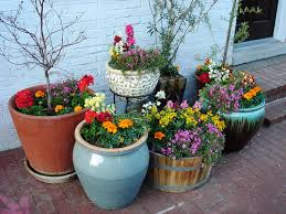 container gardening. Three Plants Container Gardening For Sunny Locations