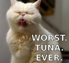 Disgusted Tuna Cat Meme on imgfave via Relatably.com