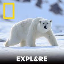 Jun 09, 2021 · mit ihren vorschlägen in sachen leichterer zugang zur österreichischen staatsbürgerschaft begibt sich die spö auf sehr dünnes eis. Arktis Auf Dunnem Eis Explore Der National Geographic Podcast