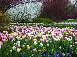 the dallas arboretum has 19 unique gardens each with its own theme stroll through the relaxing waterway and lily pond of the magnolia glade