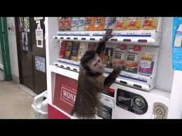 Interesting Facts About Vending Machines Fascinating Monkey Buys Juice From Vending Machine Wow Funsterdam