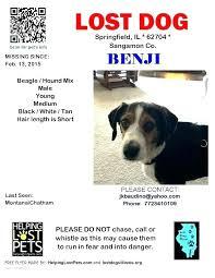 Lost Pet Flyer Maker Awesome Missing Dog Opal Sign Template Inspirational Flyer Images