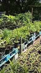 nursery items for sale tampa bay tree nursery tampa b54