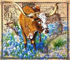 texas longhorn in bluebonnets by daniel adams