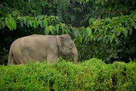essay on elephants can i pay for someone to do my report baby elephant sanctuary