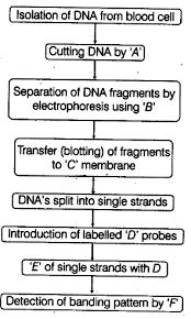 The Following Is The Flowchart Cbse Class 12 Biology