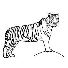 Small Picture Free Printable Tiger Coloring Pages For Kids