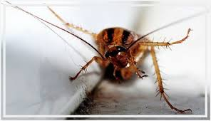 how to get rid of small roaches in kitchen luxury how to get rid