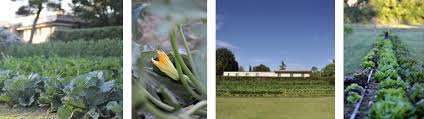 Uses Of Kitchen Garden Terme Di Saturnia Kitchen Garden Terme Di Saturnia Tuscany