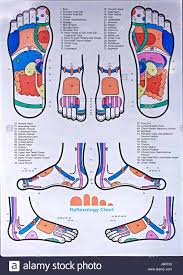 Reflexology Foot Chart Top Of Foot Foot Online Charts Collection