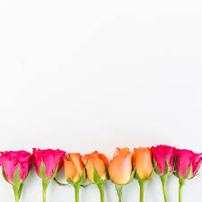 free photo spring flowers background