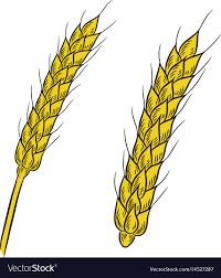 wheat drawing. Contemporary Drawing Intended Wheat Drawing H