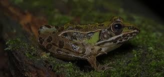 woodland frog slider 2 - Potawatomi Zoo