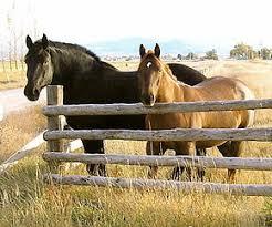 Horse Size Comparison Chart Draft Horse Wikipedia