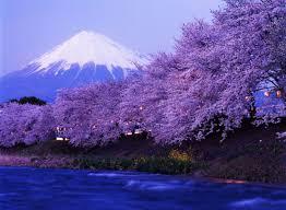 ดอกซากุระที่สวยงามและภูเขาไฟฟูจิ