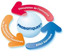 """Résultat de recherche d'images pour """"gif prébiotique"""""""