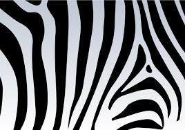 wild animal print wallpaper. Perfect Print Zebra Texture Print Wallpaper Backgrounds  Background Wild Intended Wild Animal Print Wallpaper A