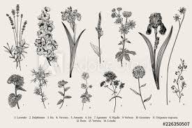 Summertime Garden Flowers Vector Vintage Botanical Illustration
