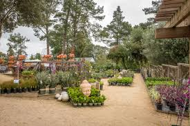 petaluma cottage gardens is a great place to go if you re looking for vases containers trellises wind chimes bird houses bird baths or garden objects