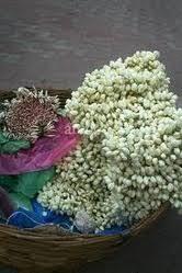 Image result for image malli,mullai jaji flowers