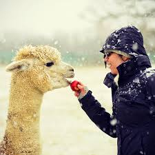 Purl Alpaca Designs Purl Alpaca Designs Knitting Workshop In Winter Duchess