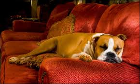 i once had a dog who refused to stop getting on the sofa sure i taught him to stay off the sofa when i was home but as soon as i went